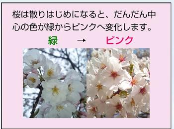 Screenshot_20190405-074719_crop_494x366.png